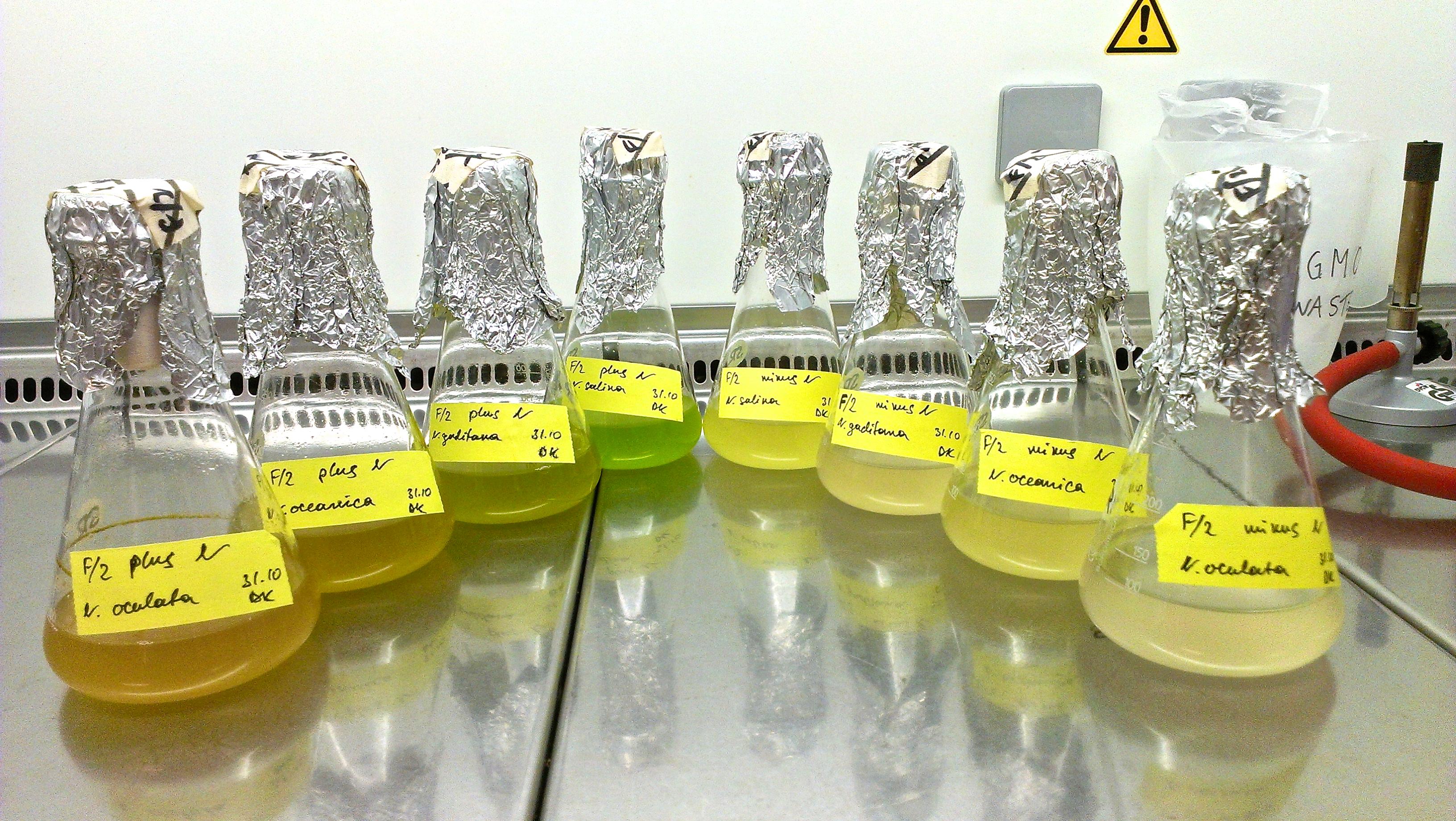 Algae biofuel essay